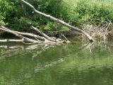 Schildkröten am Doubs