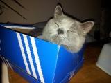 Mini im Schuhkarton